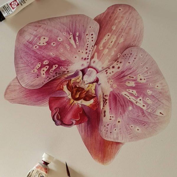 Orchid by Jarnie Godwin