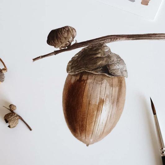 Acorn - Jarnie Godwin Art